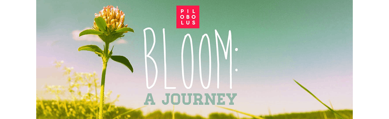 Bloom: A Journey